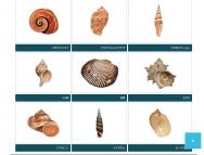 [栃木の芸術イベント]「貝ってすてき!~美しい貝、美味しい貝、とちぎの貝、大集合~」