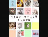 [福岡の芸術イベント]ハイカラハリネズミ展㏌貴賓館